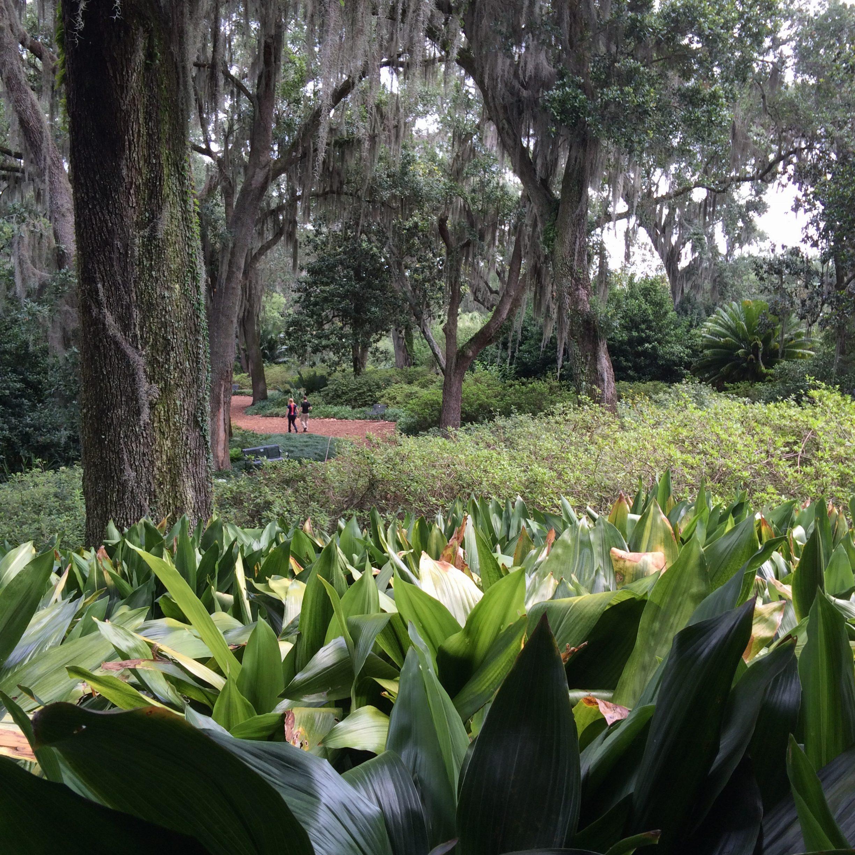 Bok Tower Gardens Cadence Cadence